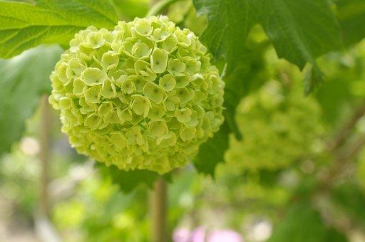 Flower, Bunch, Green