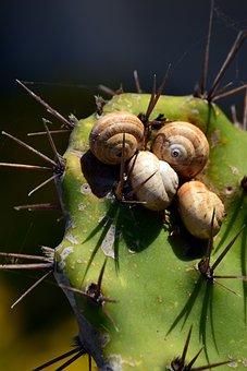 Cactus, Green, Snails, Snail Shells, Spur, Protection