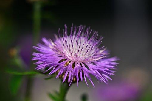 Flower, Nature, Close, Blossom, Bloom, Macro, Beautiful