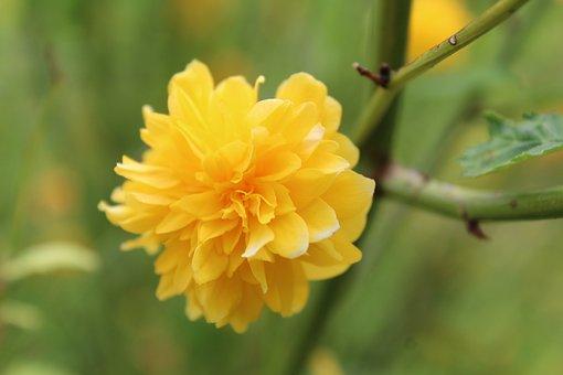 Flower, Nature, Blossom, Bloom