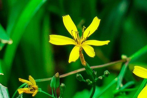 Chrysanthemum, Xie, Plant, Flower