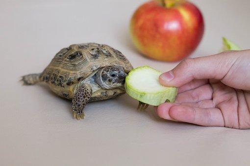 Tortoise, Fruit, Vegetables, Reptile, Animals, Shell