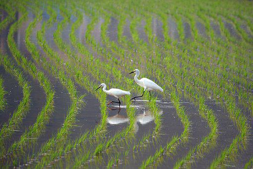 Rural, Hern, It, Landscape, Animal, S, New