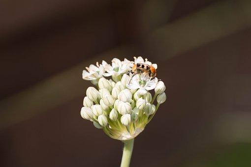 Flower, Summer, Blossom, Bloom, Insect, Garden, Nature