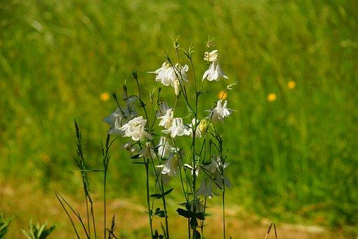 Garden, White Flowers, Tender, Filigree, Plant, Nature