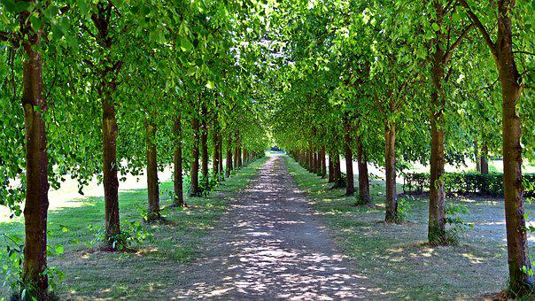 Avenue, Trees, Away, Tree Lined Avenue, Trail, Spring