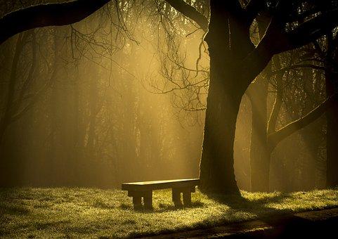 Mist, Sun Rays, Tree's, Spooky, Bench, Rest, Wood, Calm