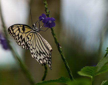 Butterfly, Papiliorama, Switzerland, Kerzers, Tropical