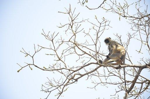 Animal, Monkey, Forest, Wild, Jungle, Fauna, Zoo