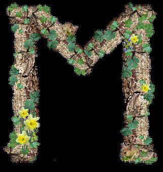 Alphabet, Letter, M, Rustic, Timber, Bark