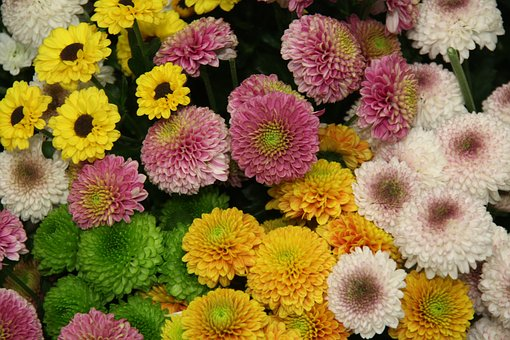 Santini, Chrysanthemum, Bloom, Blossom, Bloom, Flower