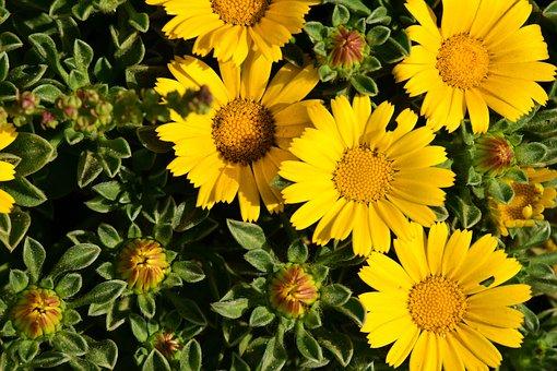 Flowers, Yellow, Yellow Flower, Blossom, Bloom, Nature