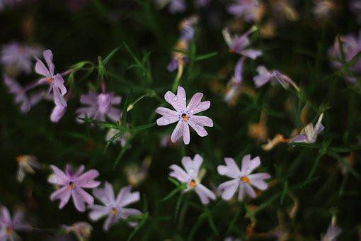 Flowers, Rain, Spring, Summer, Flora, Season, Blooming