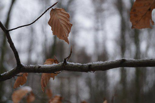 Branch, Winter, Leaf, Nature, Frost, Aesthetic, Snow