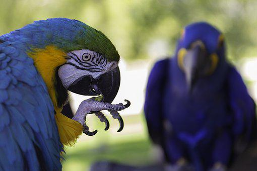 Parrot, Bird, Exotic, Wildlife, Colorful, Pet, Tropical