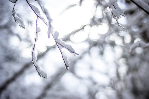 Snow, Light, Winter, Contrast, Nature, December, Cold