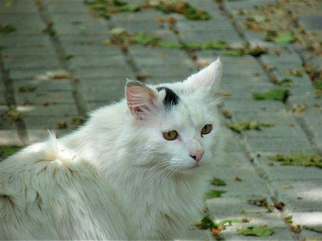 Cat, Kitten, Animal, Cute, Fauna