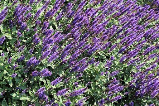 Flower Exhibition, Colorful, Blue, Decoration, Bloom