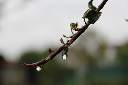 Nature, Drops Of Water, Rain, Freshness, Green, Water