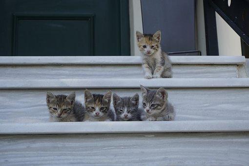 Gates, Babies, Feline