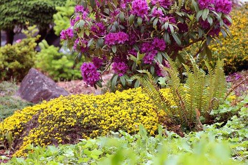 Garden, Fern, Rocks, Flowers, Plants