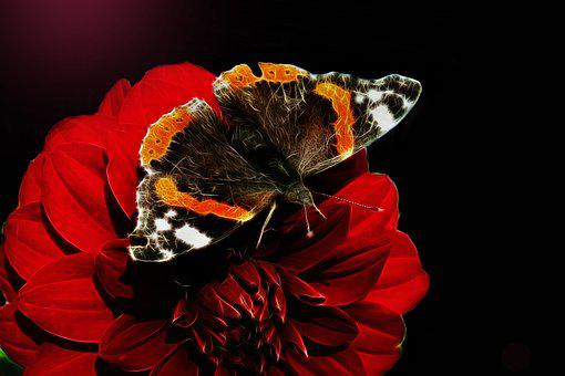 Fractalius, Edelfalter, Butterfly, Dahlia, Flower