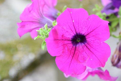 Flower, Nature, Summer Flowers, Macro, Plants, Garden