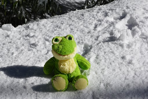 Frog, Snow, Winter, Christmas, Nature, Cold, Kermit