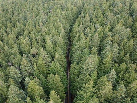 Drone, Oregon, Distance, Grass, Green, Height, High
