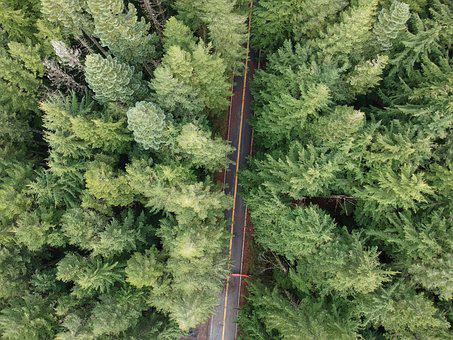 Drone, Oregon, Forest, Pine, High, Height, Green, Grass