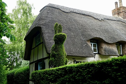 Cottage, Village, House, Green, Nature, Hedge, Rabbit