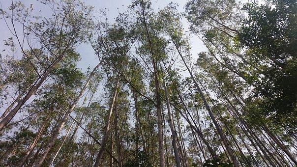 Pine, Saw Mantiqueira, Brazil, Sky, Mantiqueira, Nature