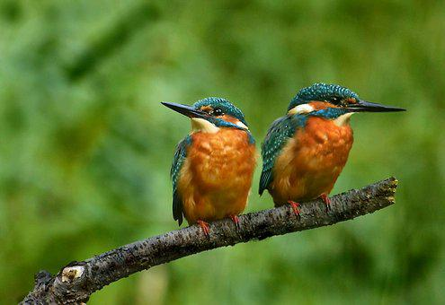 The-kingfishers, Colorful, Nature, Plumage, Color