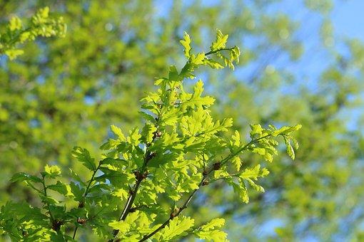 Branch, Foliage, Green, Spring, Fresh, Nature