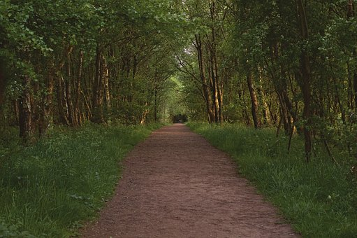 Path, Forest, Green, Nature, Park, Woods, Foliage