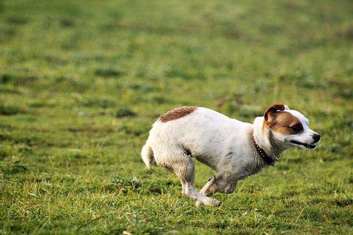 Dog, Field, Dog Playing, Small Dog, Pet, Animal, Puppy