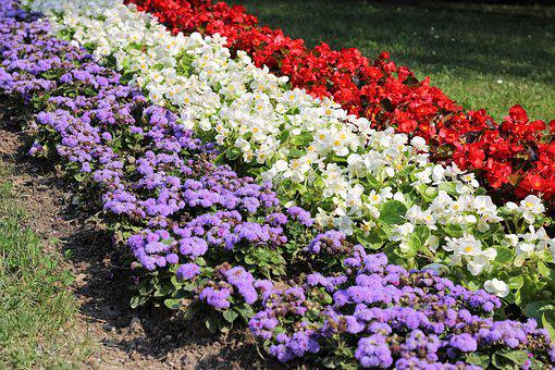 Flower Exhibition, Colorful, Blue, White, Red