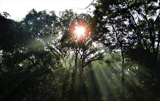 Sun Rays, Rays Of The Sun, Trees, Foliage, Sunlight