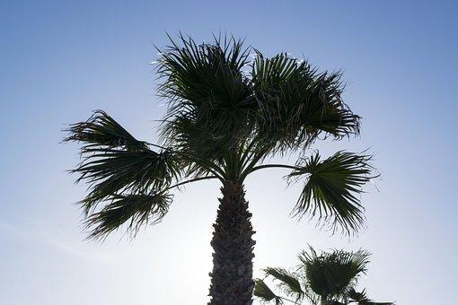 Palma, Sun, Palms, Sea, Sunset, Holiday, Atmosphere