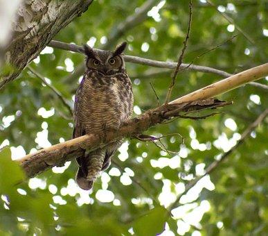 Owl, Branch, Tree, Wise, Brown, Raptor, Predator