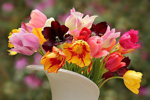 Nature, Plant, Tulips, Tulipa, Colorful, Cut Flowers