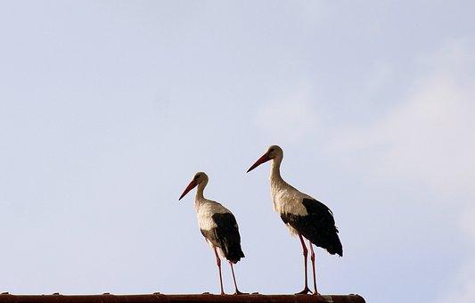 Storks, Birds, Para, Spring, Nature, Wild Birds