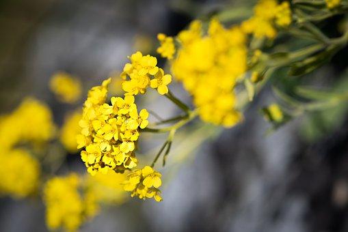 Flower, Yellow, Flowers, Yellow Flowers, Stone Garden