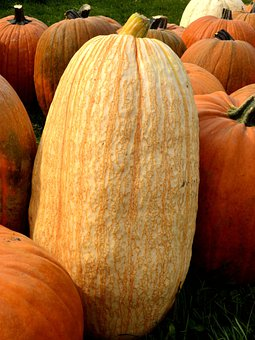 Pumpkin, Squash, Fall, Autumn, Harvest, Tall, Solo, One