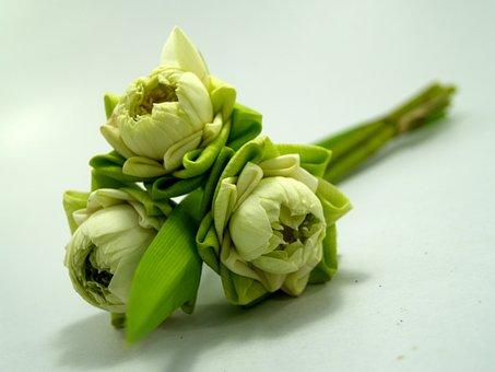 White, Flower, Lotus, Decoration, Blooming, Aquatic