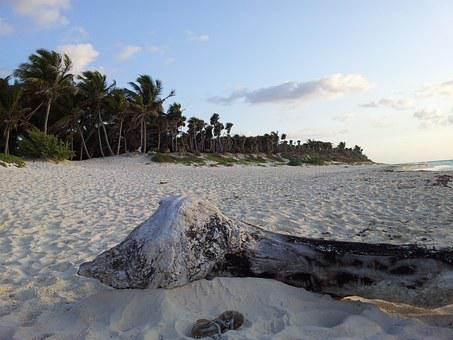 Beach, Tulum, Palms, Sand, Sky, Dawn, Calm, Solo