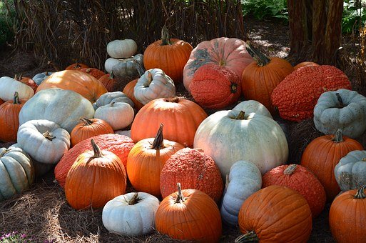 Pumpkins, Fall, Halloween, Decor, Seasonal, Decorations