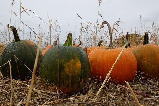 Halloween, Pumpkin, October, Autumn, Holiday