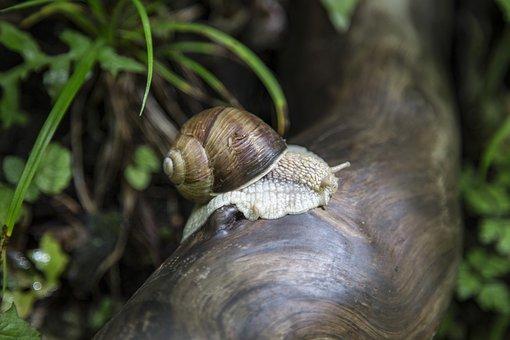 Snail, Macro, Nature, Close, Detail, Zoom, Garden