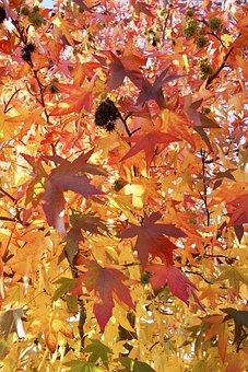 Leaves, Autumn, O, Autumn Leaves, Fall, Leaf, Nature